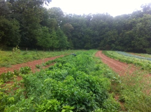 Green Meadow Farm, Lancaster, Pennsylvania. Ian Brendle. Philly Farm to table. Slow food.