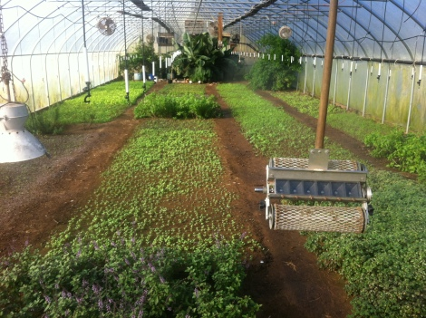 Greenhouse at Green Meadow Farm. Ian Brendle. Lancaster, PA to Philadelphia. Local farms. Farm to table.